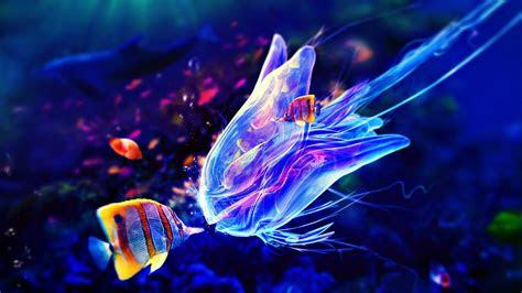 jellyfish  wallpaper hd desktop wallpapers  hd