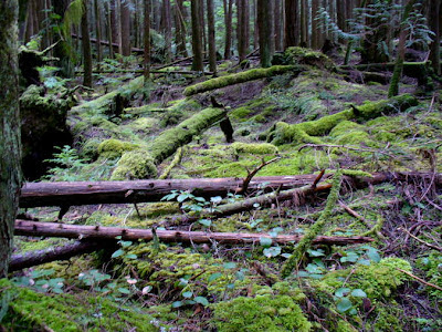 sunshine coast, bc, forest, green