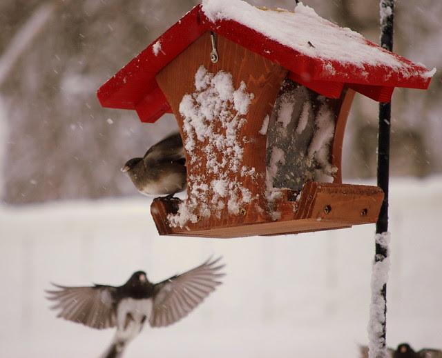 Winter birds 1
