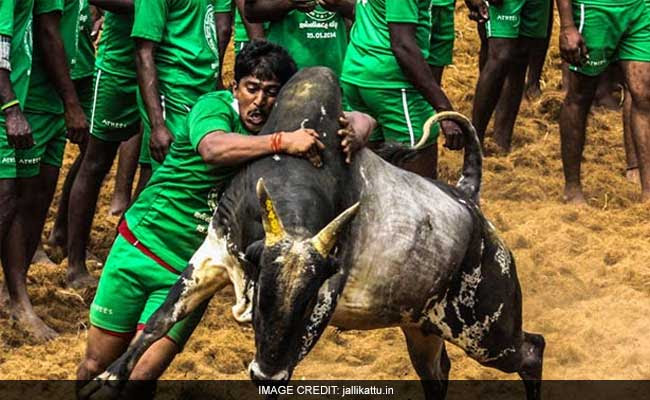 Image result for jallikattu marina beach
