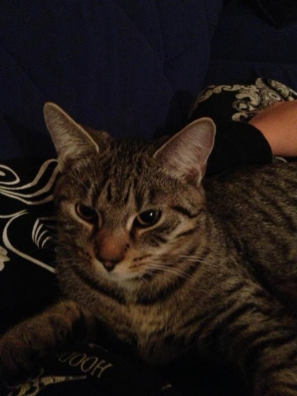 Ich suche schnell ein neues Heim in Pforzheim  Katzen kaufen und verkaufen über private