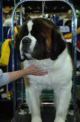 Dog Show 037