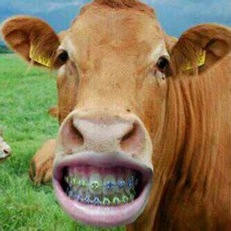 yuk tengok kumpulan foto hewan lucu bikin gemesh
