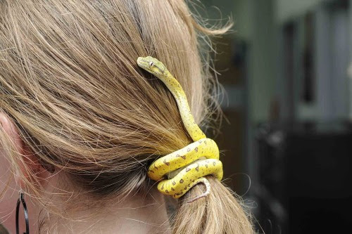 amortentiafashion:  Add a touch of life to your outfit by tying your hair back with a very tiny snake.