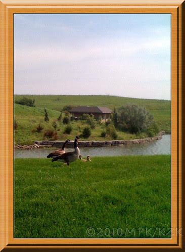 geese1fr