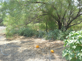 More Garden 1 Mid August 2015