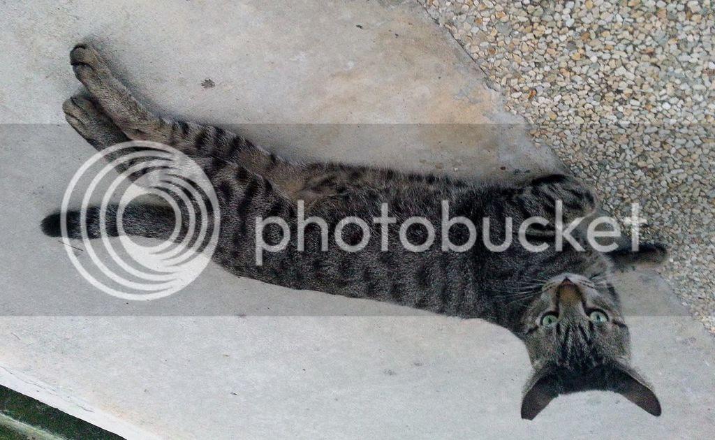 photo CatJRT14Aug10.jpg