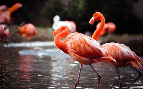 flamingo wallpapers hd pixelstalknet