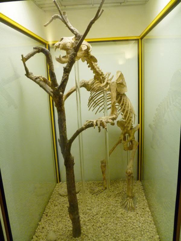 photo museocienciasnaturalesvitoria025_zps4bc76842.jpg