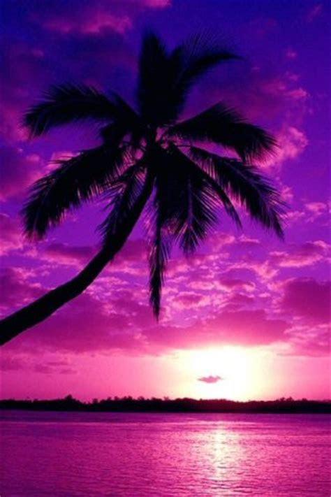 FULL WALLPAPER: Purple sunset wallpaper