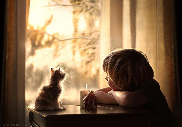 ภาพถ่ายลูกแมวและเด็กจ้องออกไปนอกหน้าต่าง