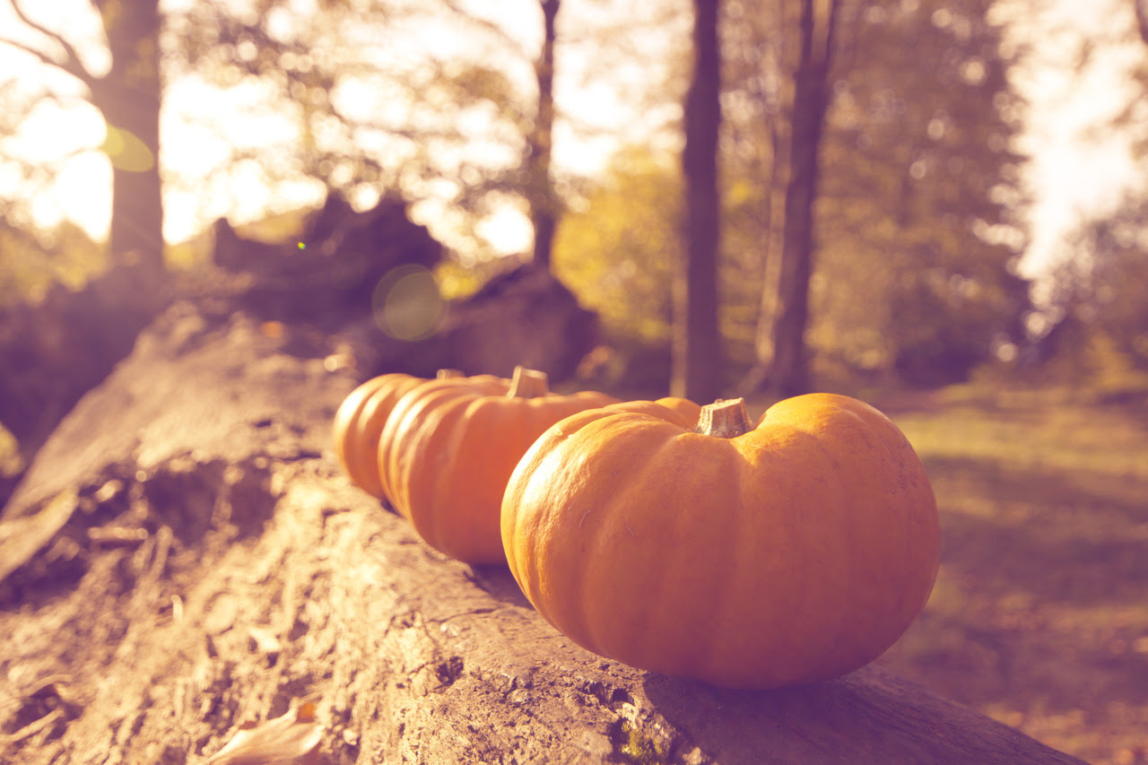 Image result for autumn tumblr photography coffee