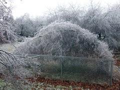 IceStorm_121208h