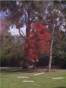 Aflame_tree_with_matches_2