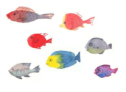 fishcombo1