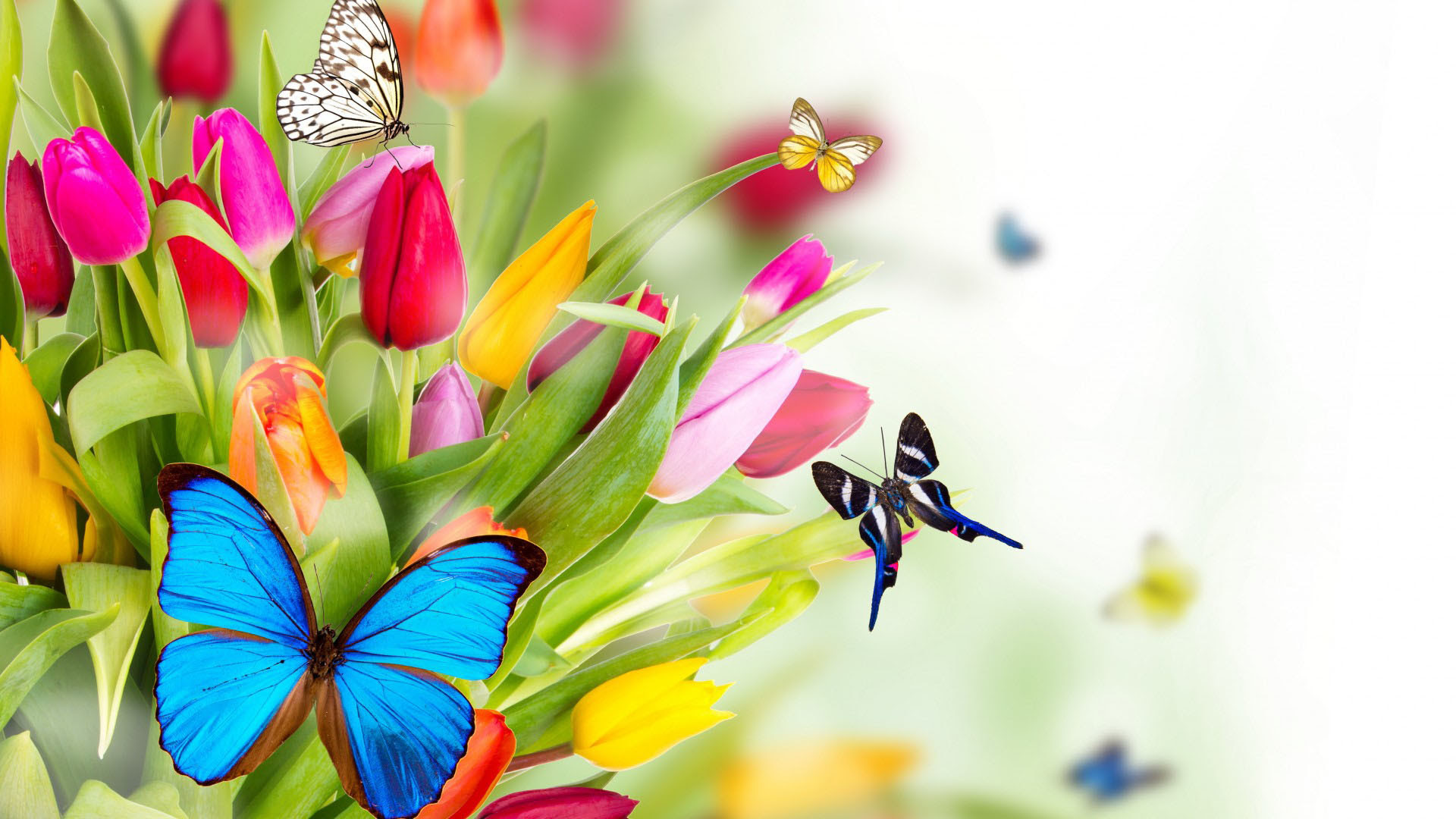 Beautiful Butterflies And Flowers Wallpapers 56 Images