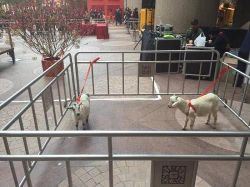 動保團體聯署:立刻停止以山羊作宣傳的商場活動!