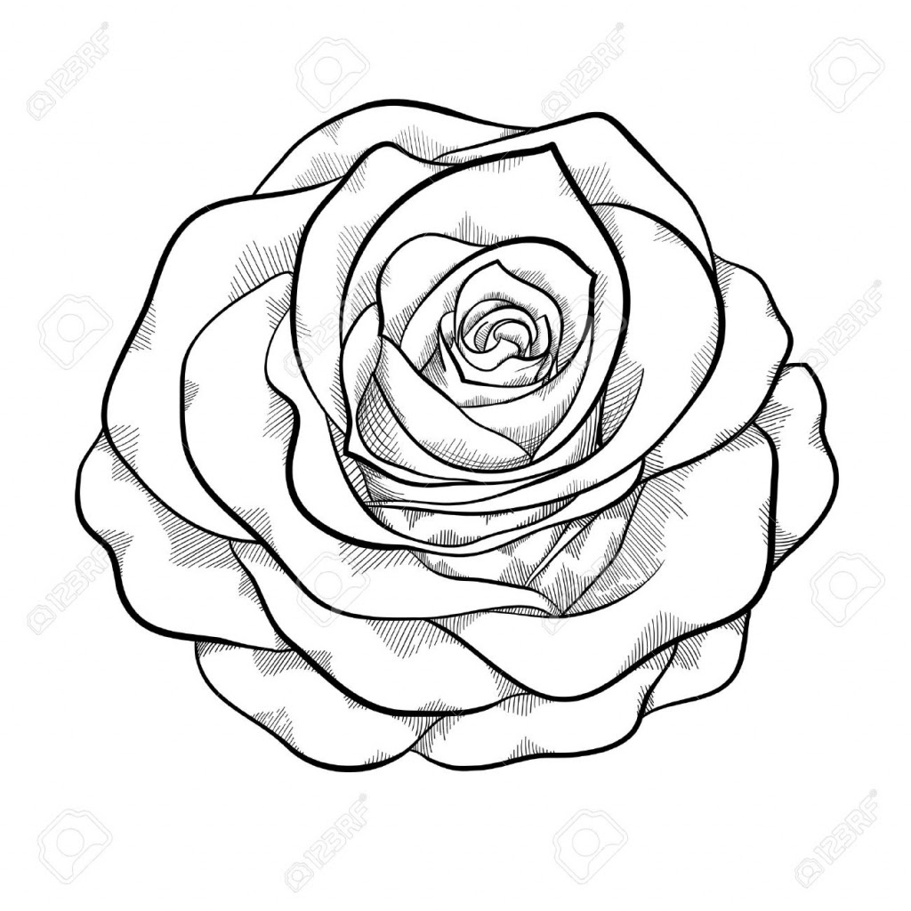 Roses In Black And White Drawing At Getdrawingscom Free For