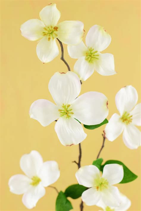 Dogwood Flower Cream 32in