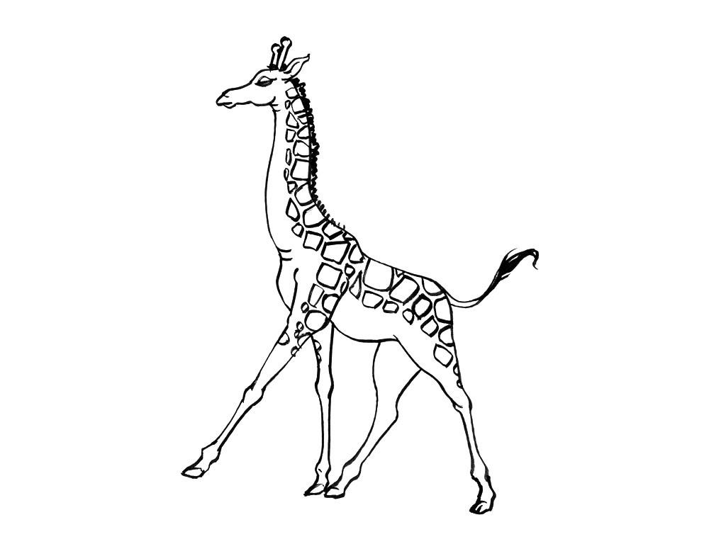 Coloriage  imprimer Animaux Girafe numéro