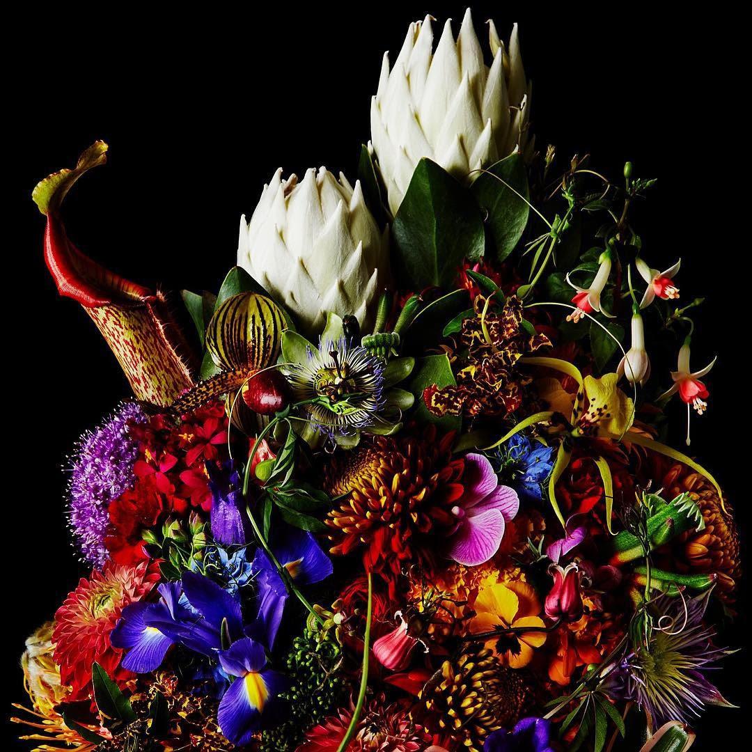 encyclopedie-fleurs-08