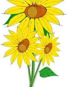 1000 Gambar Bunga Matahari Vektor HD Terbaru