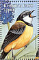 Australian Golden Whistler Pachycephala pectoralis