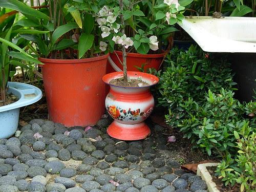 Kampong plants (3) - spittoon