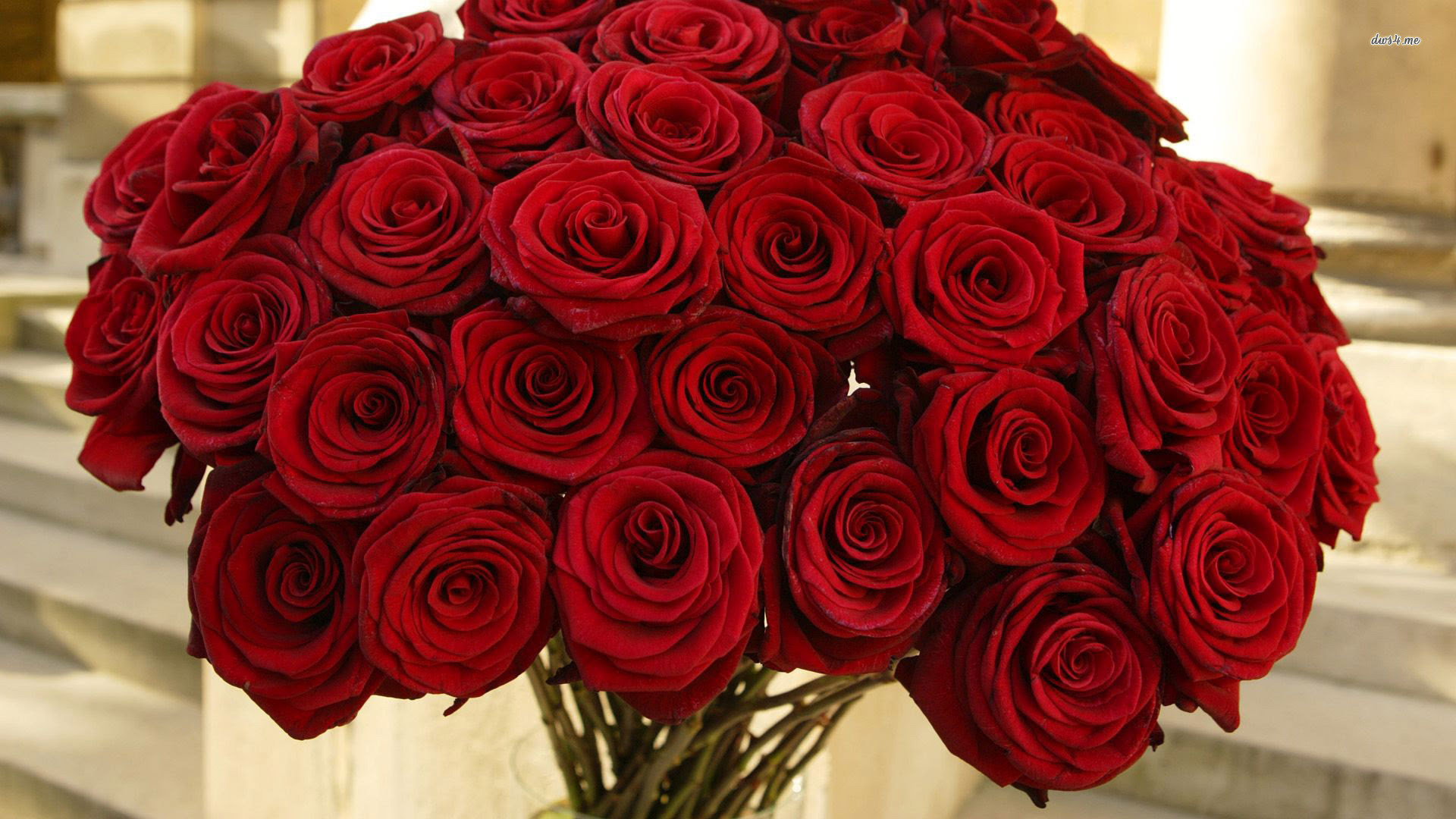 Red Roses Wallpapers For Desktop 50 Images