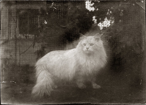 Roy, the ghost cat