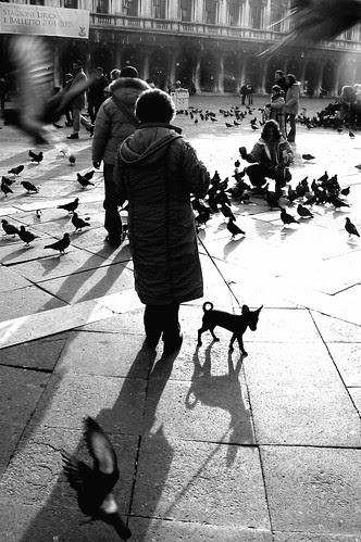 Bird-dog