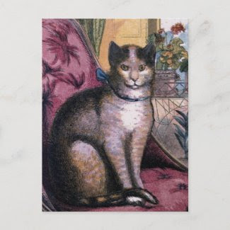 Cat Portrait Postcards postcard