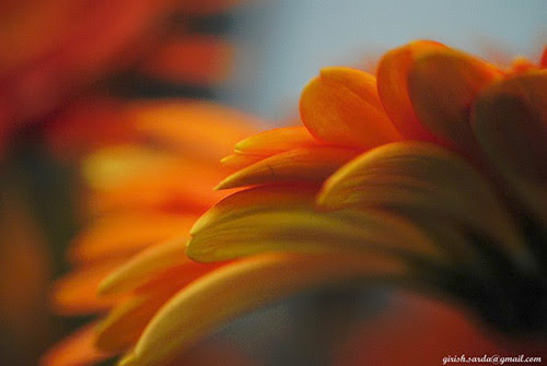 Flower Pictures