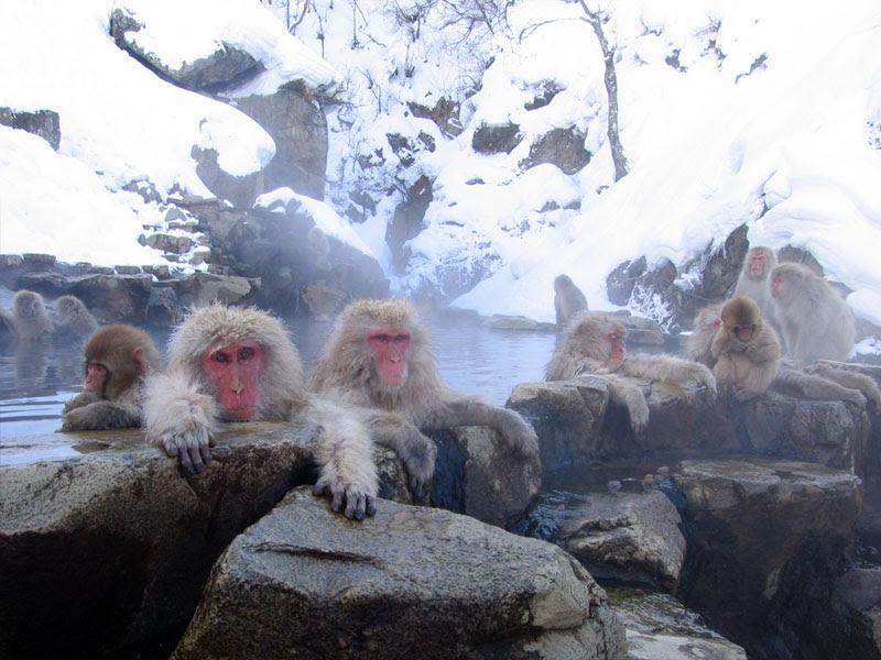 File:Jigokudani hotspring in Nagano Japan 001.jpg