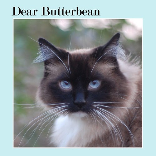 Dear Butterbean: Get Heard and Get Fed!