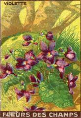 fleurs des champs 12