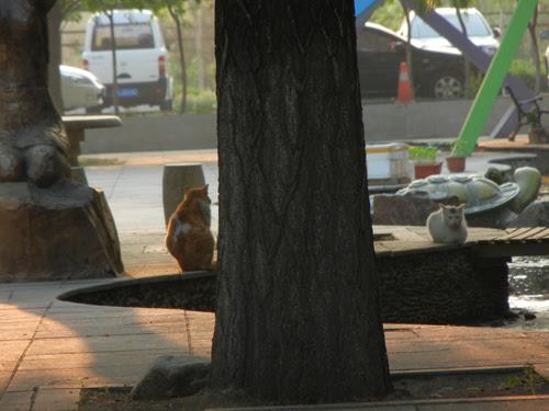 Cats in Shenyang, China _ 9935