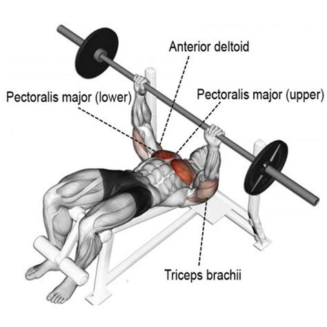 effective chest exercises   science