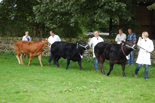 Bowes Agricultural Show Sept 12 (23)