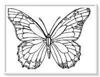 Siluetas De Mariposas Para Colorear Dibujo De Zentangle De