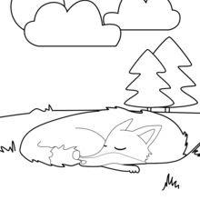 Dibujos Para Colorear Zorro Dormido Eshellokidscom