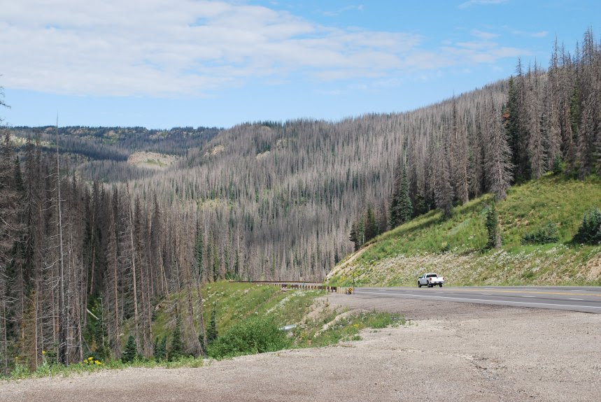 Standing-dead trees are shown on Wolf Creek Pass in Mineral County. One in 14 trees are dead in Colorado forests and over the past seven years, the number of gray-brown standing-dead trees increased 30 percent to about 834 million, according to the state's annual forest survey.