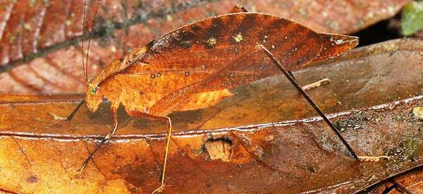 "perierga.gr - ""Κατάσκοποι"" της φύσης: Τέλεια καμουφλαρισμένα πλάσματα!"