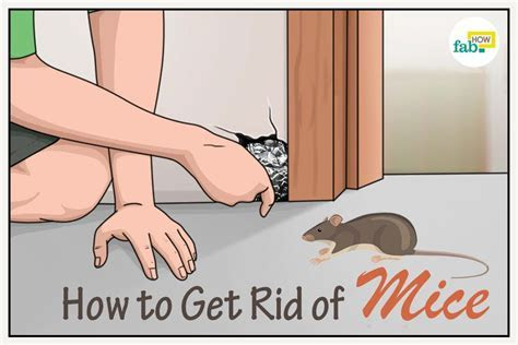 How to Get Rid of Mice Fast: 5 Poison Free Methods   Fab How