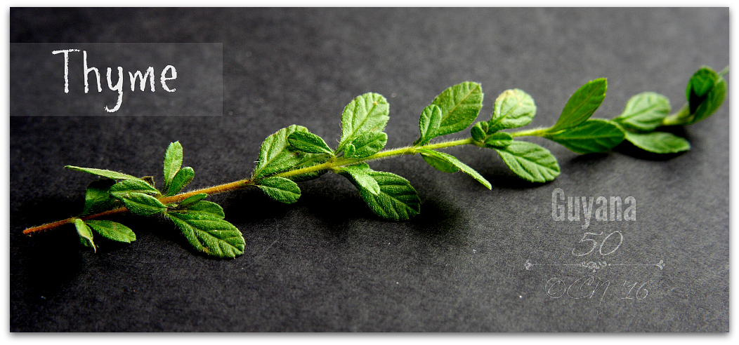 Thyme photo thyme_zps6ux1qwic.png