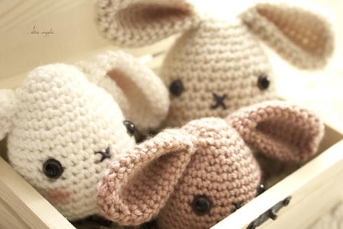 conills capsa
