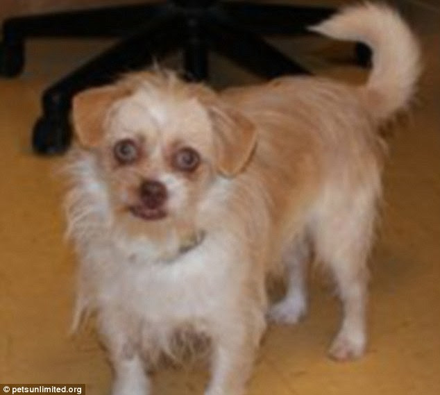 Unlucky Nucky: The Boardwalk Empire star was also likened to this terrier mix, Butters