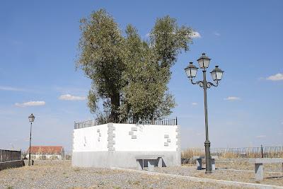 Olivo del Calvario en Fuente la Lancha