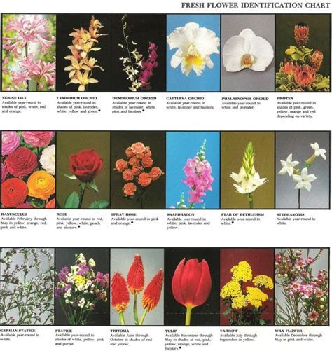 Fresh flower identification chart   Be great printout with