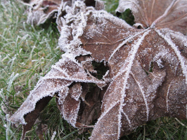 February frost 2013 015